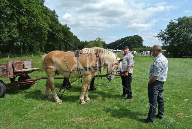Ardenner trekpaard