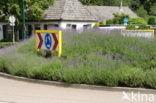 Lavendel (Lavandula spec.)