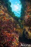 Middellandse zee