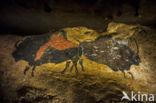 Steppenwisent (Bison priscus)