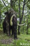 Wolharige Mammoet (Mammuthus primigenius)
