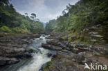 Nationaal park Ranomafana