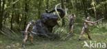 Mammoet (Mammuthus)