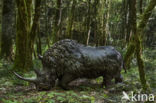 Wolharige neushoorn (Coelodonta antiquitatis)