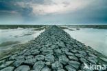 Nieuwe Bildtdijk