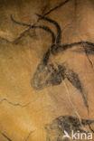 Oeros (Bos primigenius primigenius)
