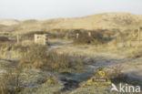 Noordhollands Duinreservaat