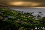 Cap Blanc-Nez