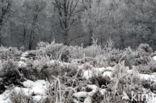 Boswachterij Ruinen