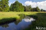 Beekdal Oude Diep Het Drentse Landschap