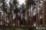 Nationaal Park Dwingelderveld