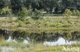 Lagieskamp Naardermeer