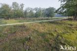 Natuurbrug Zanderij Crailo