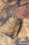 Kleine huismoeder (Noctua interjecta)
