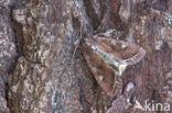 Groente-uil (Lacanobia oleracea)