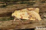 Gewone gouduil (Xanthia icteritia)