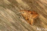Oranje Kruidenmot (Udea ferrugalis)