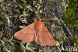 Gepluimde spanner (Colotois pennaria)