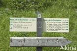 Réserve Naturelle de Sixt-Fer-à-Cheval