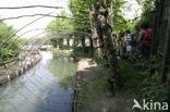 Eendenkooi Batenburg