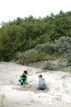 Duinen van Oostvoorne