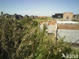 De Lindewijk