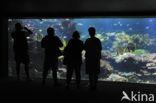 Nausicaa Aquarium