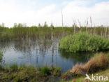 Internationaal Natuurpark Bourtanger Moor-Bargerveen