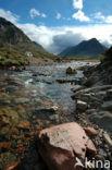 rivier de Coe