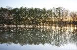 Nationaal Park de Biesbosch