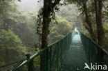 Parque Nacional Monteverde